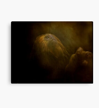 Primate At Thought Canvas Print