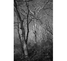 Naked Trees  Photographic Print
