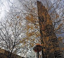 Behind The Trees by joan warburton
