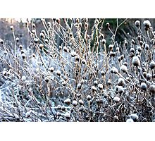 Frosty Morn Photographic Print