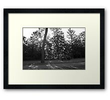 Car and Trees Framed Print