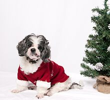 Christmastime by Misti Love