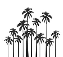 Black and White Exotic Tropical Palm Trees Photographic Print