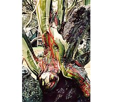 Old Man Snowgum with coloured bark Photographic Print