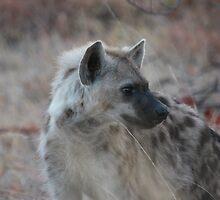 Spotted Hyaena by Jo McGowan