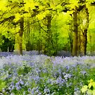 sunlight woods by cynthiab