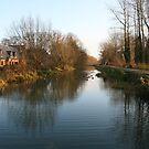 riverview by cynthiab