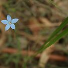 Lil Blue Flower by ThinkSee