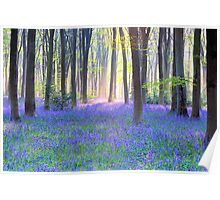 Bluebell Spring - An English Bluebell Wood in Spring Poster