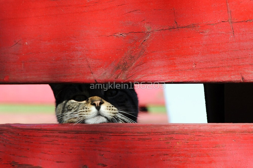 Peek a Boo by amyklein196203