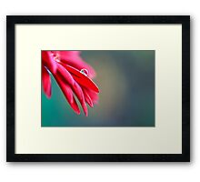 One and Only - Gerbera Macro with Drop of Dew on a Petal Framed Print