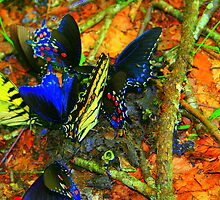 Butterfly luncheon by julie101