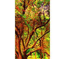 Olive trees Photographic Print
