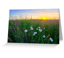 Meadow Sunrise Greeting Card
