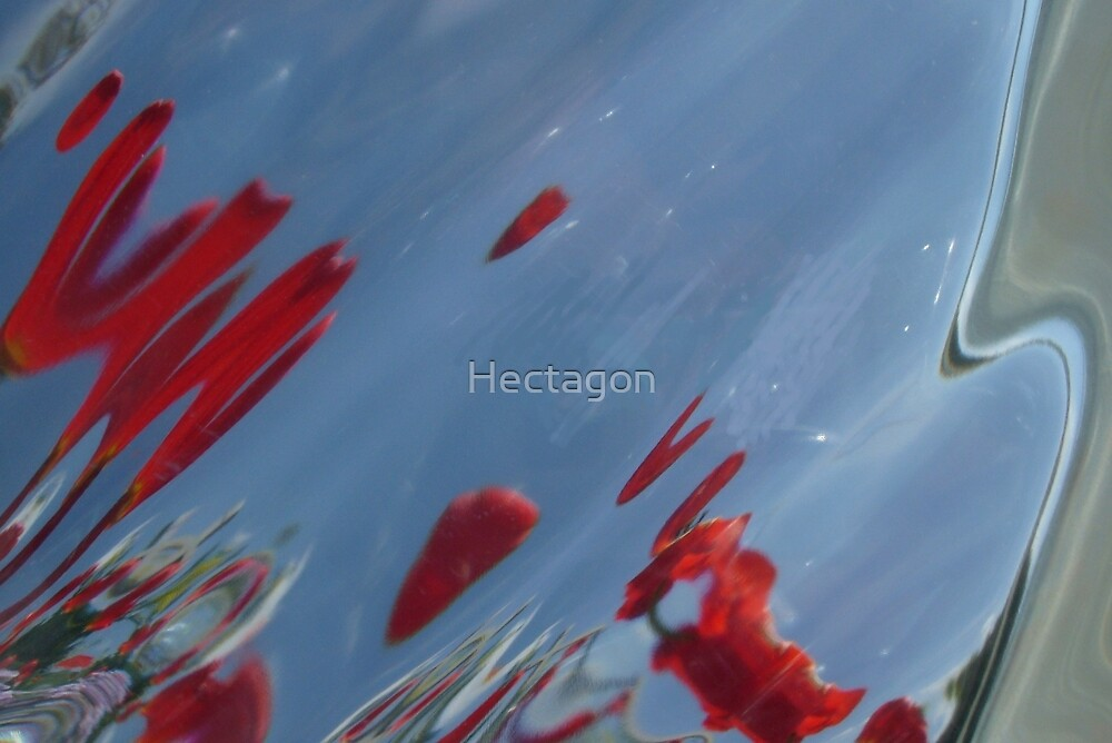 Tulips, Dorothy, Abstract Photography, Raw Image, Refraction through glass by Hectagon