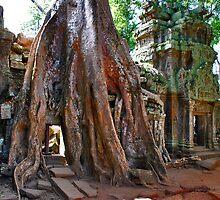 Angkor Wat, Ta Prohm by Adri  Padmos