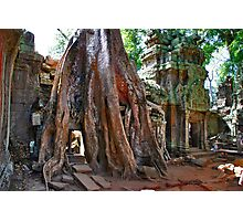 Angkor Wat, Ta Prohm Photographic Print