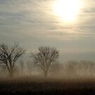 The Sun Peeking Through The Fog by angelandspot