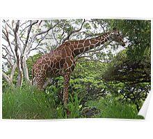 Giraffe In The Honolulu Zoo - Oahu, Hawaii Poster