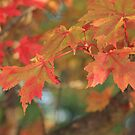 Fall colours by Lauren Banks