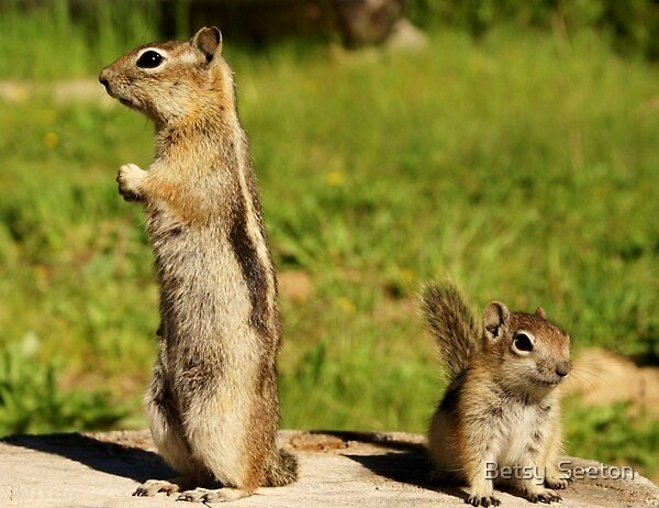 Mom On Lookout by Betsy  Seeton