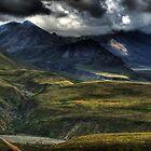 Denali National Park by Gyuri Nagy