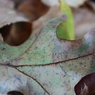 Leaf 1 by Steven Carpinter