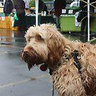 Market Dog by Steven Carpinter