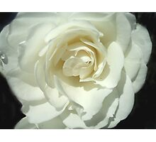 Pure Petals Photographic Print