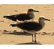Cherry Grove, SC Seagulls Photographic Print