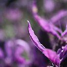 Lavender Flower by Steven Carpinter