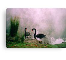 Swans,Daylesford Metal Print