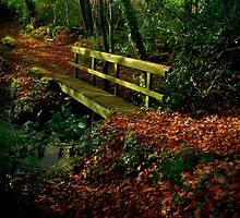 Autumnal Wonderland by imageworld