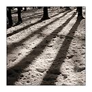 Winter Shadows - Hertford Heath by MoGeoPhoto
