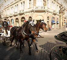 Horse & Trap, Prague by LisaRoberts