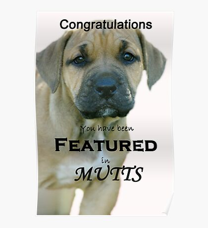 Banner for Mutts group Poster