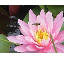 Bee Heaven Photographic Print
