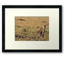 Cheetah - Masai Mara Framed Print
