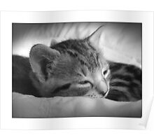 Tribble (Fast Asleep) Poster