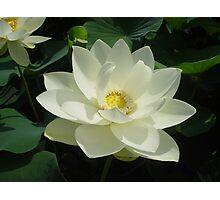 Lotus Magic Photographic Print