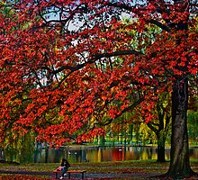 Boston Public Garden by LudaNayvelt