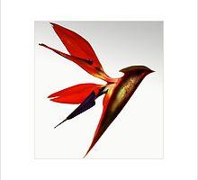 Bird of Paradise - (Flower) by MoGeoPhoto