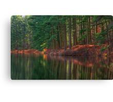 Forest Shoreline Reflections Canvas Print