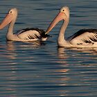 Pelicans at Sunset by fotoWerner