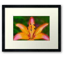 Garden Lily Framed Print
