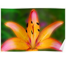Garden Lily Poster