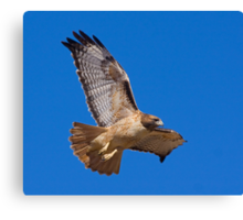 1101096 Red Tailed Hawk Canvas Print