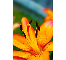 Garden Lily 2 Photographic Print