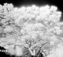 in the garden of my dreams the trees are alive by Juilee  Pryor