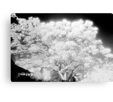 in the garden of my dreams the trees are alive Canvas Print